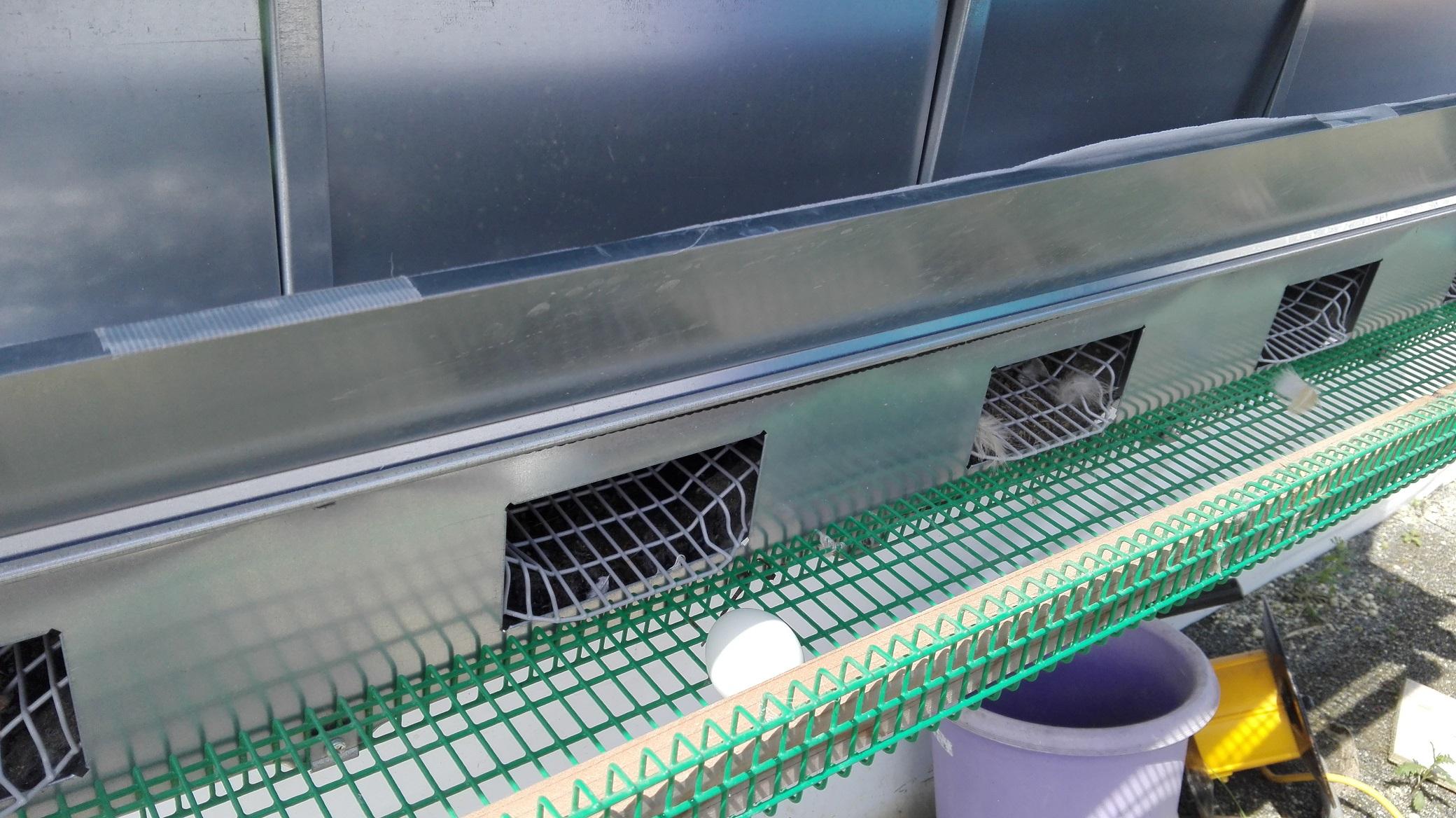 ネスト卵あり